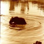 медвежонок в Яйве 2